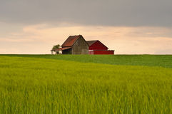 Barn in sunset light Stock Photography