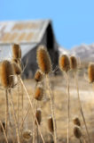 Barn With Thistles Royalty Free Stock Photos