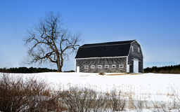 Barn and Tree. A beautiful barn and tree set on a field covered with snow in Maine Royalty Free Stock Images
