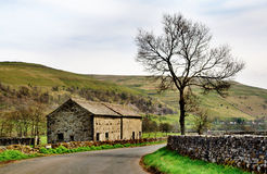 Barn and tree in the Yorkshire Dales. A stone built barn and solitary tree at the side of a country lane in the Yorkshire Dales, England, set again a backdrop of Royalty Free Stock Photos