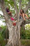 Barn up ett träd Arkivfoto
