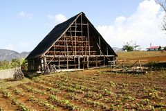 A barn used to store and dry tobacco, Cuba Royalty Free Stock Image