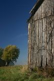 Barn, Vine, and blue sky - Vertical Royalty Free Stock Images