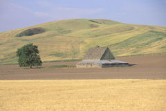 A barn and wheat field Stock Images