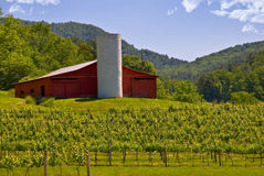 Barn at the Winery / Mountains. Grape vines in a field with a barn, or grain bin,and mountains in the background.  In northeast Georgia, USA Royalty Free Stock Photography