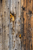 Barn wood wall background texture. Background texture pattern of old barn wood boards - rustic cowboy antique vintage style stock image