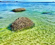 Barnacle rocks in clear water Stock Photography