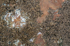 Barnacles On Copper Colored Rock -Background stock photos