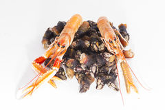 Barnacles and crayfish. Stock Photo