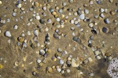 Barnacles lie on the sandy beach stock image