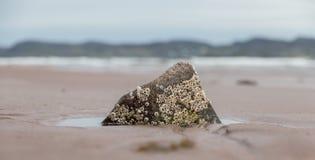 Barnacles on a rock Stock Photos
