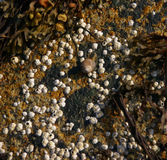 Barnacles on tidepool granite boulder Royalty Free Stock Photos
