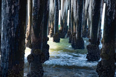 Barnacles from Under the Pier Stock Photo