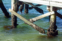 Barnacles on Wooden Pier Stock Images
