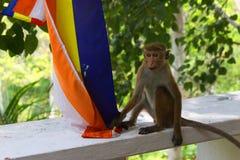 Barnapa som spelar med buddistflaggan royaltyfria foton