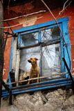 A girl with a dog in a poor quarter looking out the window of an old house stock image