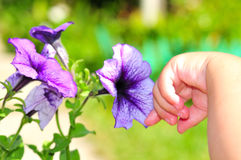 barnblommahand little trycka på för s Royaltyfri Foto