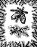 Barnches with pine cones and fir frame. Hand drawn fir frame and two branches with pine cones Royalty Free Stock Image