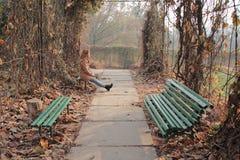 Barnet, att le och den nätta kvinnan i hösten parkerar arkivfoton