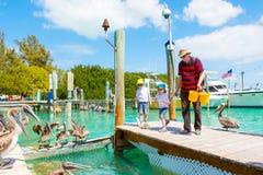 Barnet avlar och två pojkar för liten unge som matar fiskar och stora bruna pelikan i port av Islamorada, Florida tangenter man o arkivfoto
