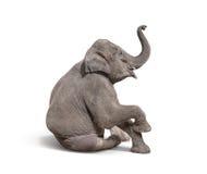 barnet behandla som ett barn den isolerade elefanten sitter ner till showen på vit backgroun Arkivbilder