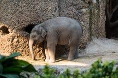 Barnet behandla som ett barn elefantanseende med dess hänga för stam Arkivfoto