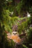 Barnet behandla som ett barn ugglor i ett träd Fotografering för Bildbyråer