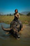 Barnet bevattnar på buffel 02 Arkivbild