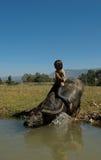 Barnet bevattnar på buffeln Royaltyfria Bilder