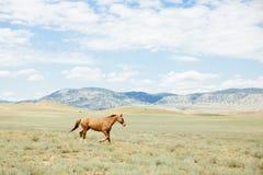 Barnet bryner hästen som stöter ihop med fältet Sommar utomhus Arkivfoto