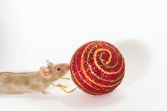 Barnet bryner musen som sniffar på julbollen Arkivfoto