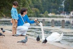 Barnet fostrar och hennes matande svanar för den lilla sonen på sjön royaltyfri foto