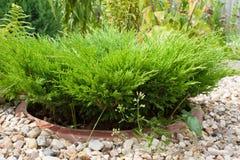 Barnet gör grön en i en blomsterrabatt som fodras med grus Royaltyfria Bilder