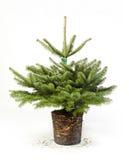 Barnet gör grön julgranen med rotar Arkivfoton