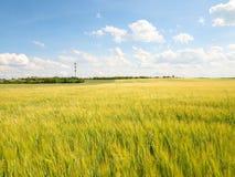 Barnet gör grön kornhavre som växer i fältet, ljus på horisonten Sol ovanför horisonten Royaltyfri Fotografi