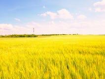 Barnet gör grön kornhavre som växer i fältet, ljus på horisonten Sol ovanför horisonten Arkivfoto