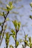 Barnet gör grön på våren Royaltyfri Fotografi