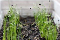Barnet gör grön tillväxt Arkivbild