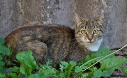 Barnet grånar strimmig kattkatten Royaltyfria Bilder