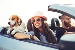 Barnet kopplar ihop med en hund som kör i en cabriolet arkivbild