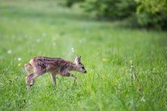 Barnet lismar anseende i gräs Sommarfaunor och flora Royaltyfri Foto