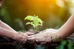 Barnet och föräldern räcker att plantera det unga trädet på svart jord royaltyfri foto
