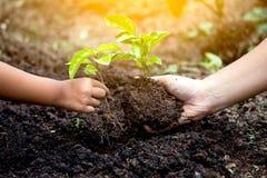 Barnet och föräldern räcker att plantera det unga trädet på svart jord tillsammans Arkivbild