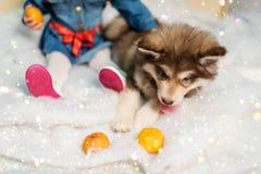 Barnet och hans husdjur Royaltyfri Bild
