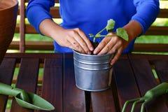 Barnet räcker att plantera den unga plantaväxten i krukan royaltyfria bilder