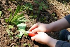 Barnet räcker att ta bort ogräset i trädgård med leksakskyffeln arkivbilder