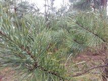 Barnet sörjer i skogen efter regnet Arkivfoto