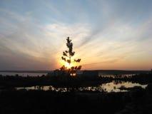 Barnet sörjer i solnedgångstrålar royaltyfri bild