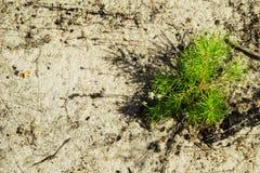 Barnet sörjer på den sandiga jorden i en skog, bästa sikt Arkivfoton