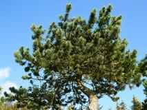 Barnet sörjer trädet ut i natur Arkivbilder